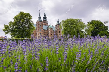 Lavender fields in Tivoli gardens